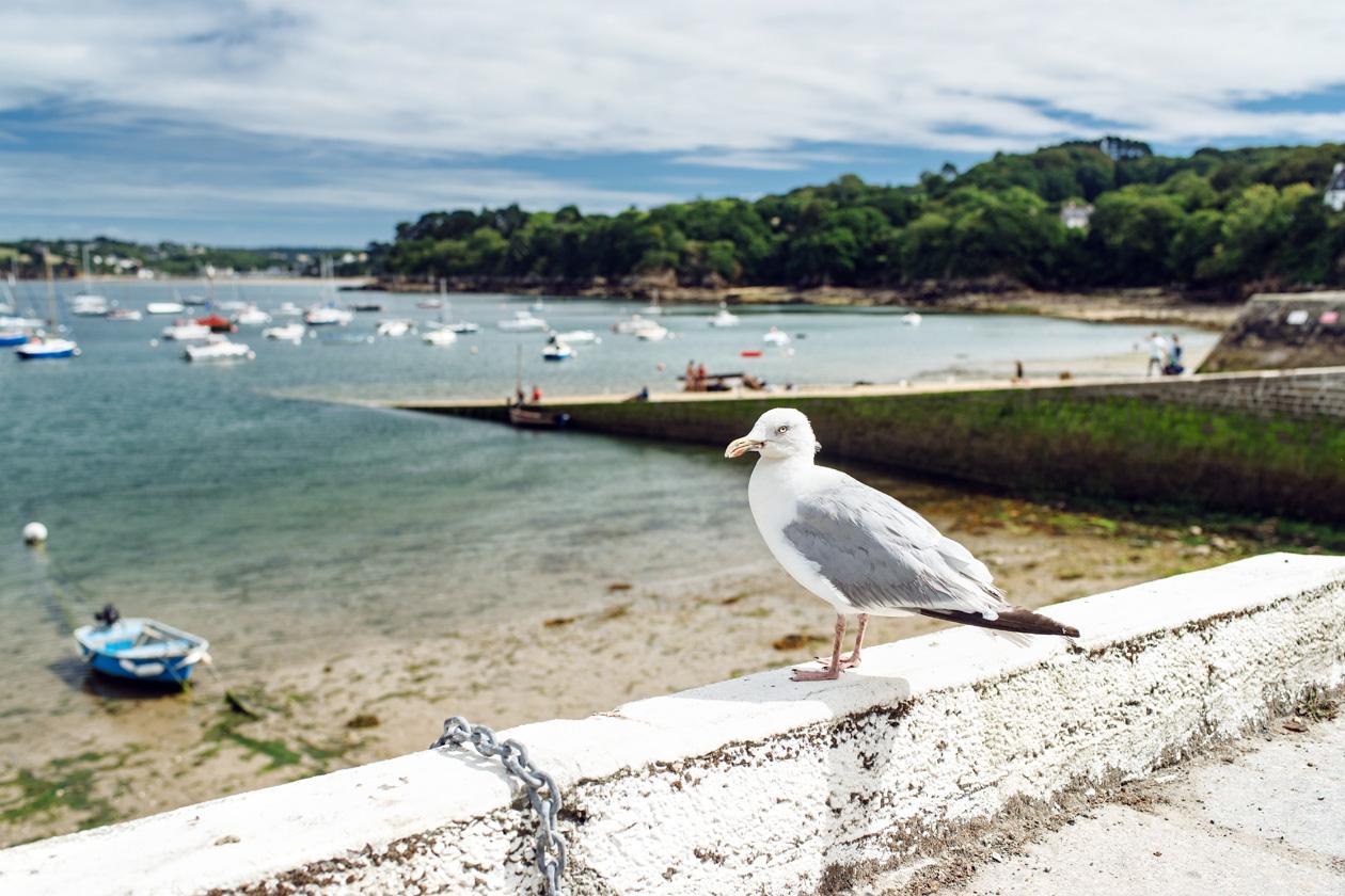 Bretagne: balade dans le port de Douarnenez