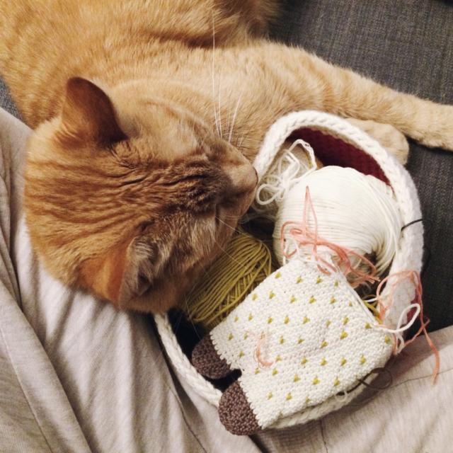 Mon petit chat roux couchée contre mes jambes et mon panier à crochet