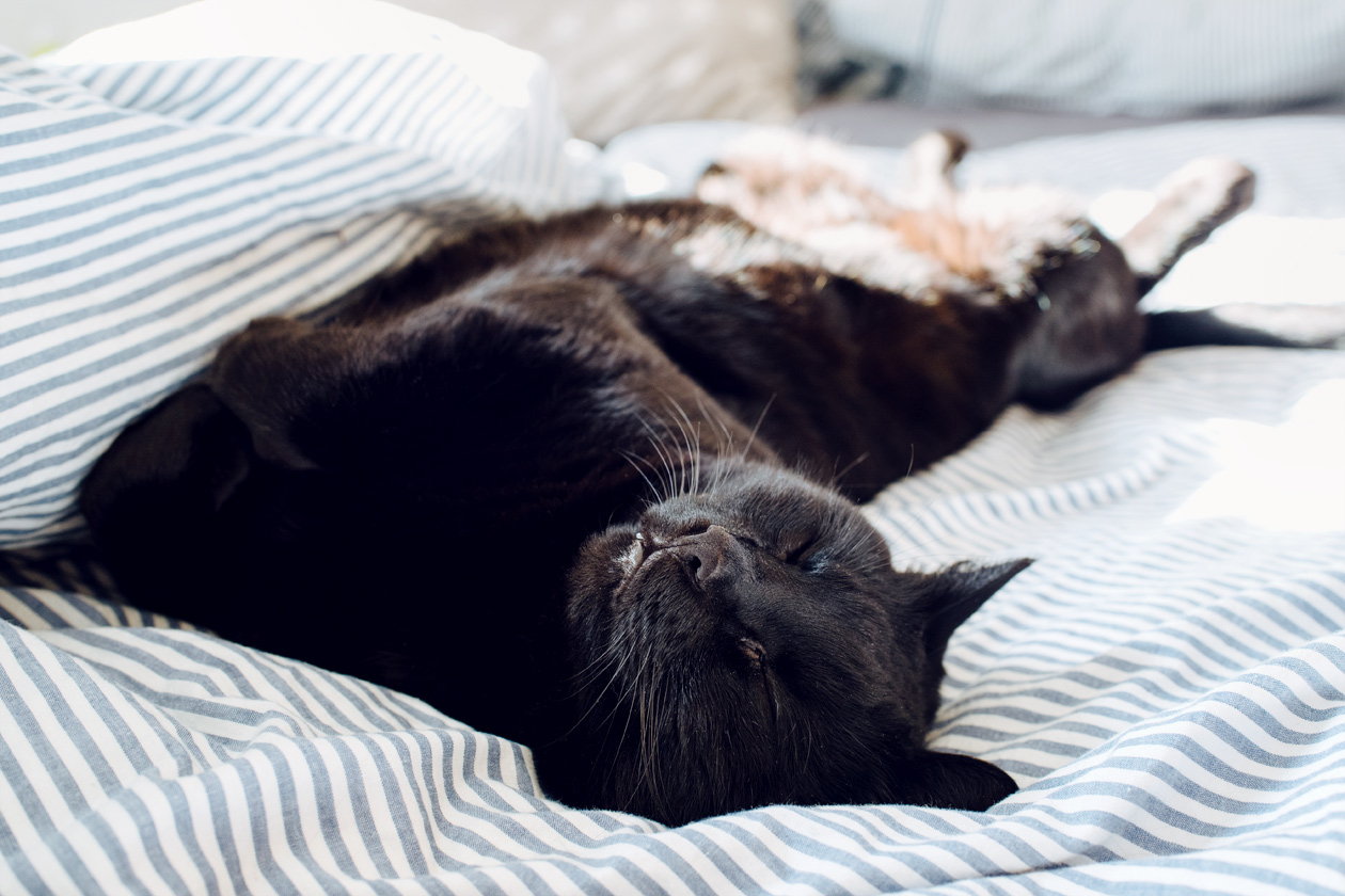 Mon beau chat noir se prélassant dans la couette