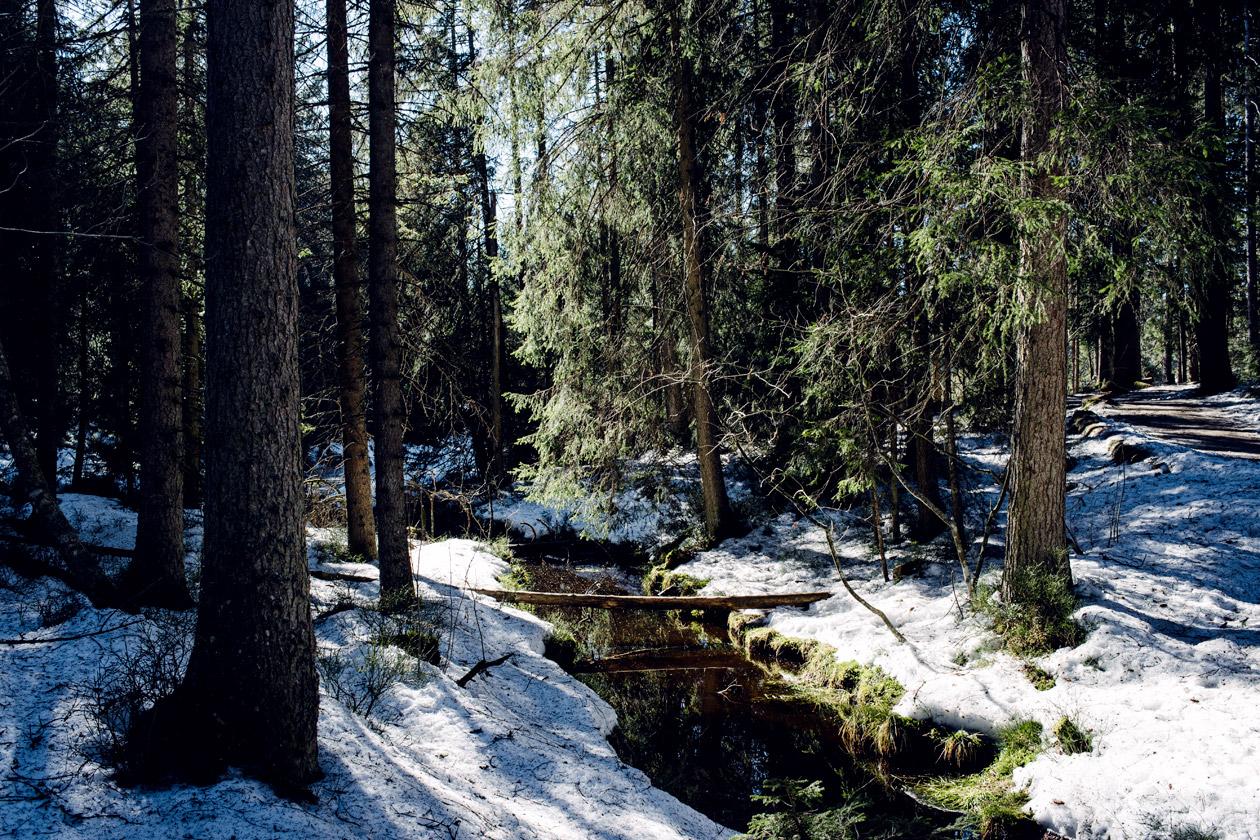 Promenade hivernale à l'étang de la Gruère, dans les Franches Montagnes
