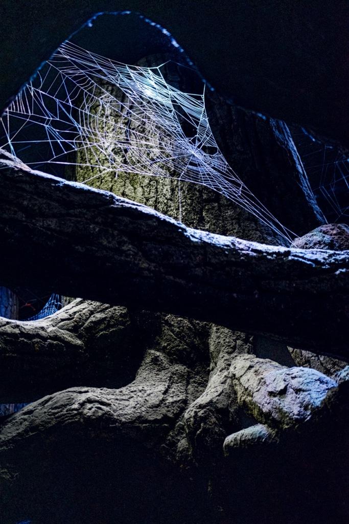 Visite des Studios Harry Potter à Londres – Toile d'araignée géante dans la forêt interdite