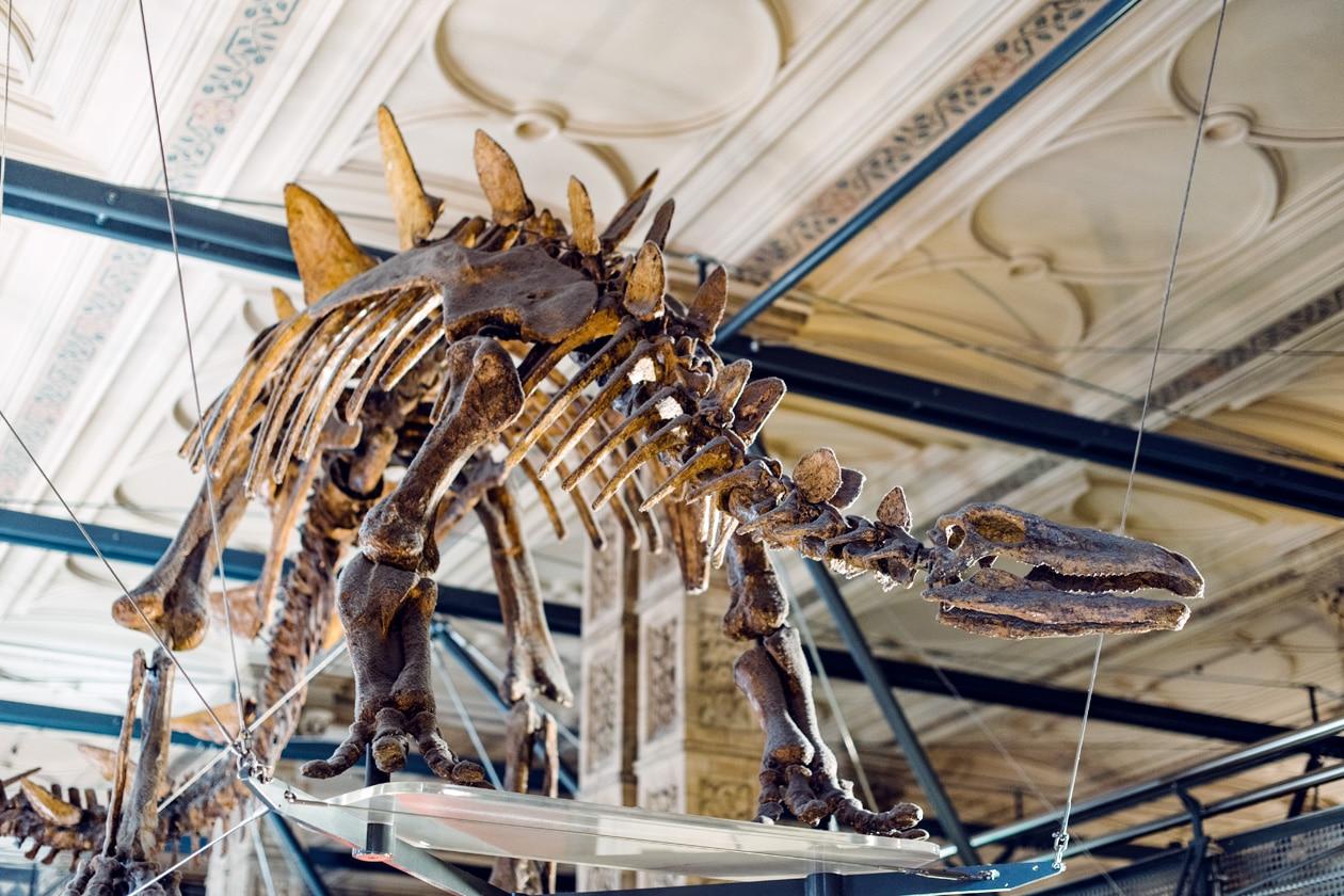 Squelette de dinosaure exposé au Musée d'Histoire Naturelle de Londres