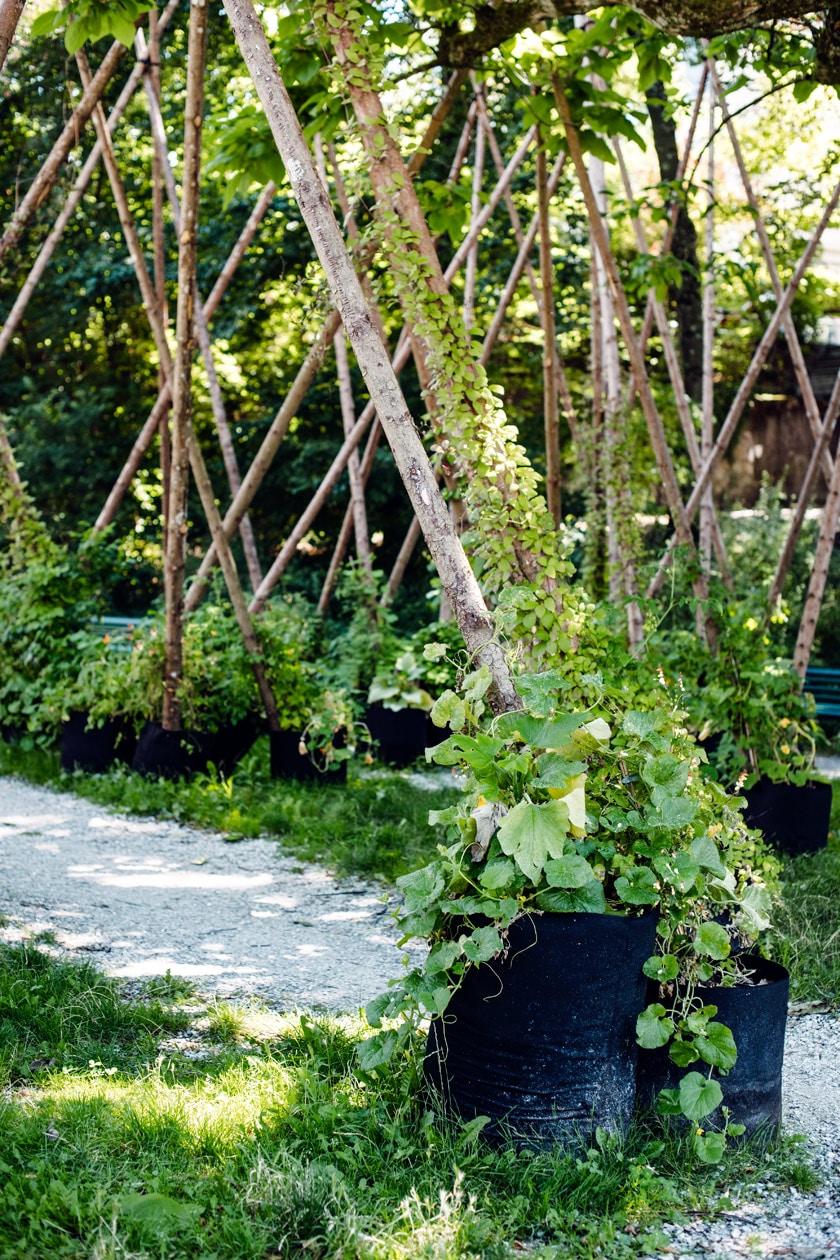 Lausanne Jardins 2019 – Micro Macro – Jardin de plantes grimpantes installé dans le square de Montétan
