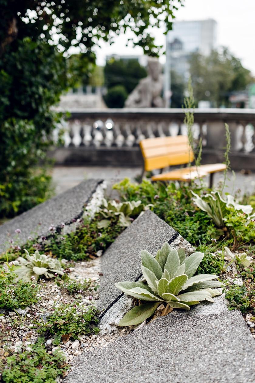 Lausanne Jardins 2019 – La Renaissance du peuplier – Placette du peuplier