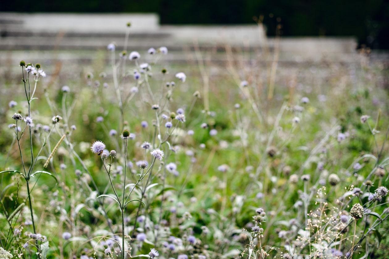 Lausanne Jardins 2019 – La Grande Pimprenelle – Promenade Jean-Villard-Gilles
