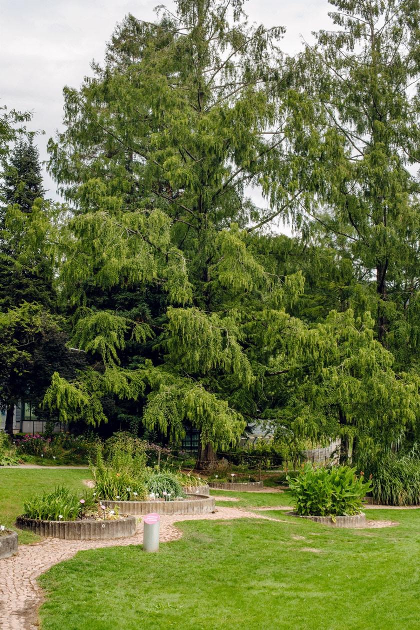 Freiburg im Breisgau – Balade au jardin botanique