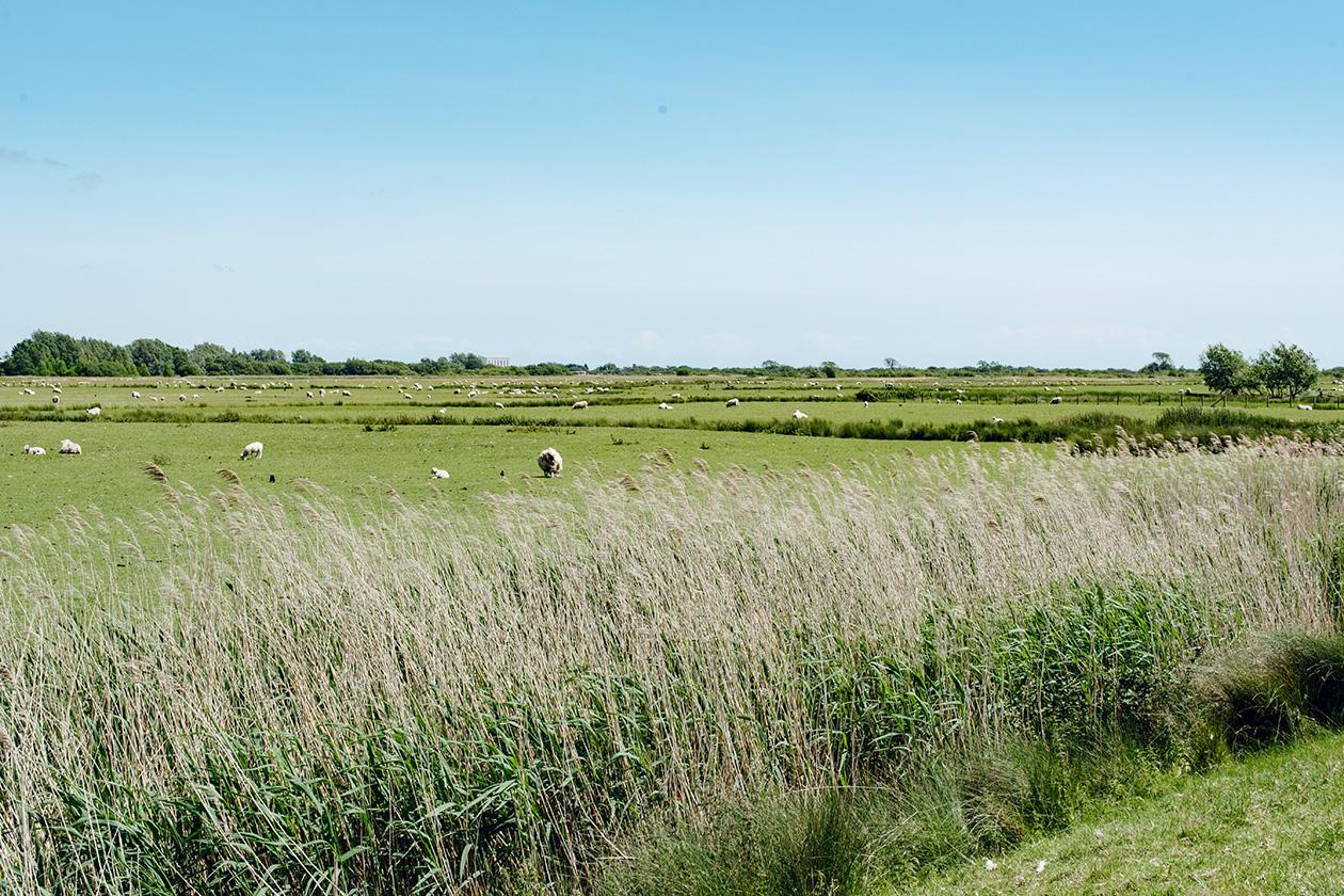 Promenade dans la campagne anglaise jusqu'aux ruines du château de Camber