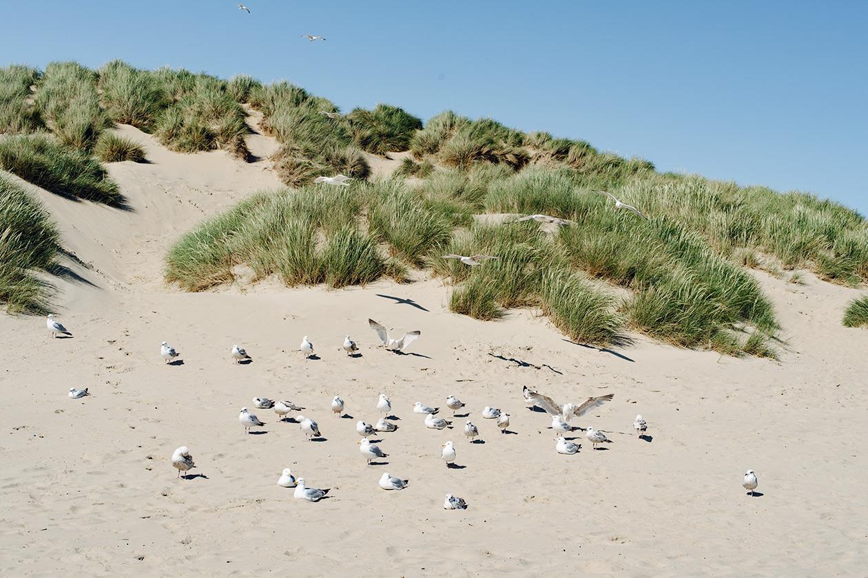 Promenade le long de la plage de sable de Camber, dans le sud est de l'Angleterre