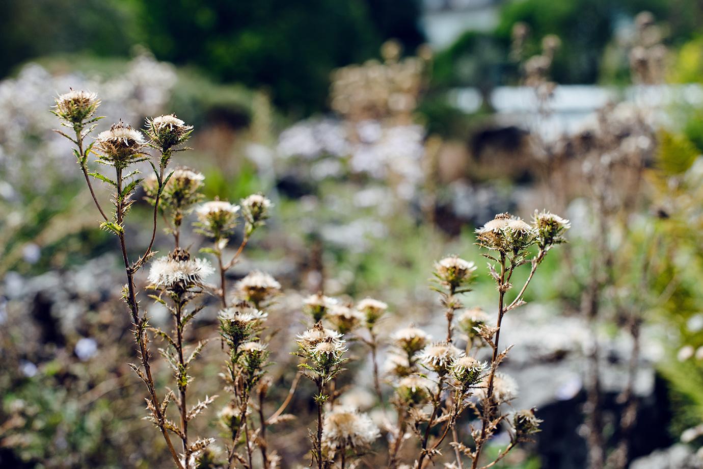 Promenade au jardin botanique de Bâle