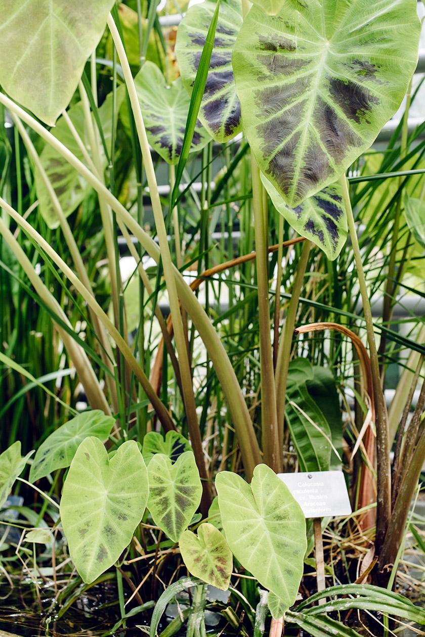 À l'intérieur de la serre Victoria du jardin botanique de Bâle
