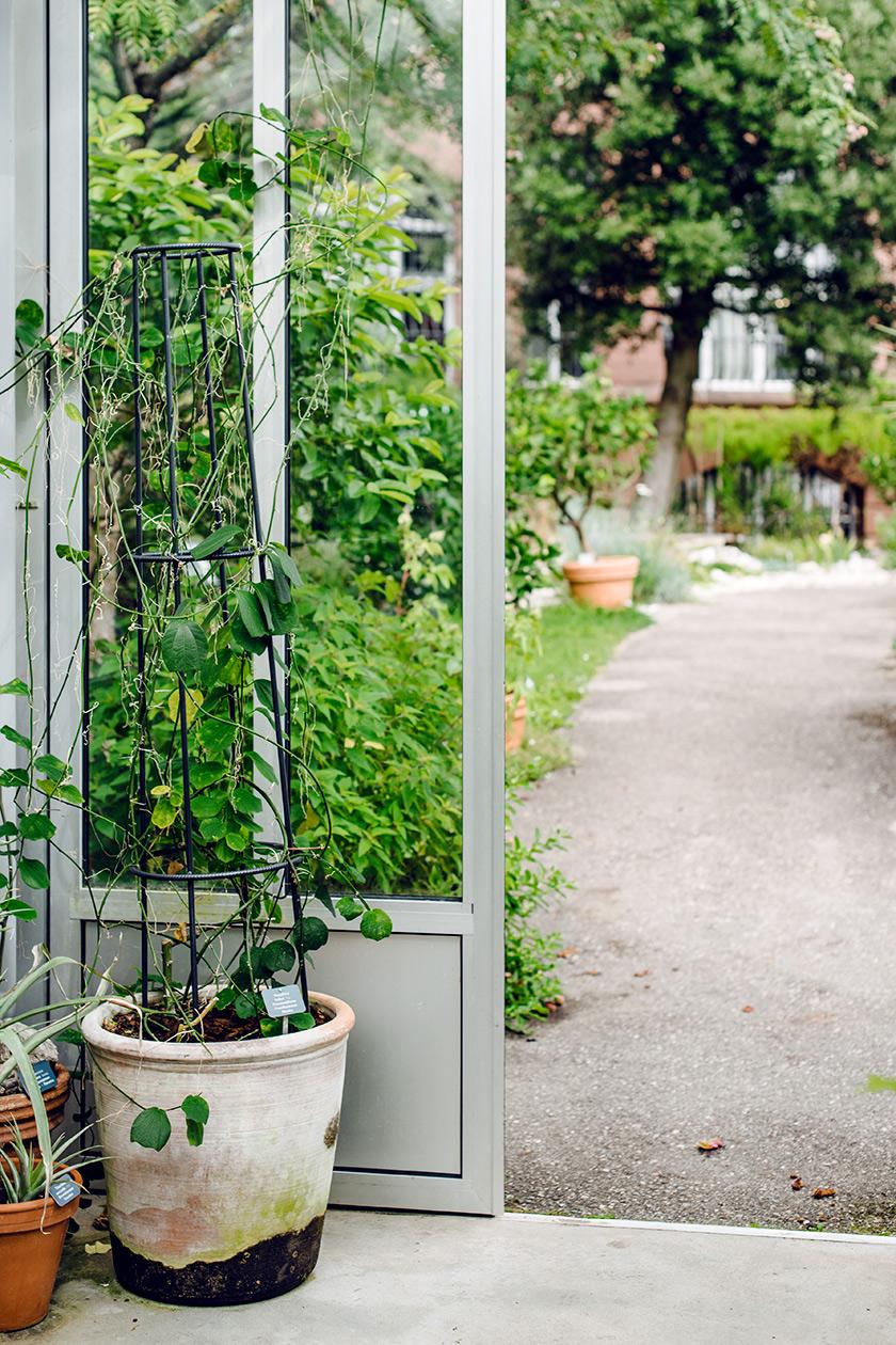 La serre des cactus et des succulentes du jardin botanique de Bâle