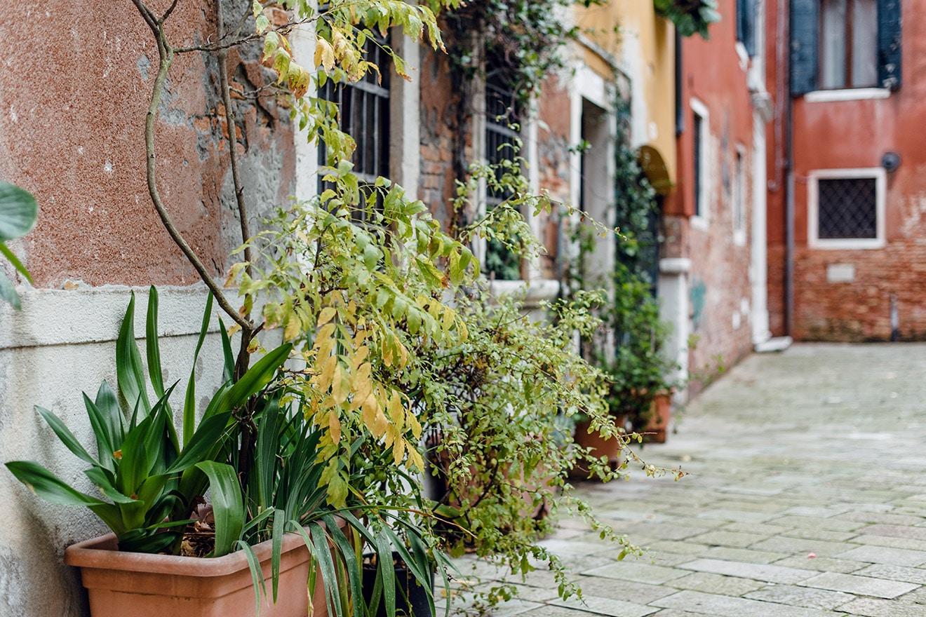 Pots de plantes alignés contre les façades d'une petite cour vénitienne