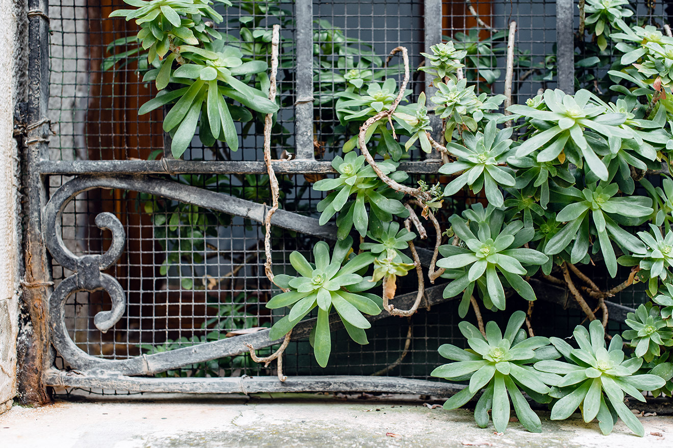 Pots de succulentes sur le bord d'une fenêtre