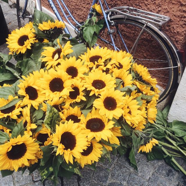 Bouquets de tournesols au marché de Bienne