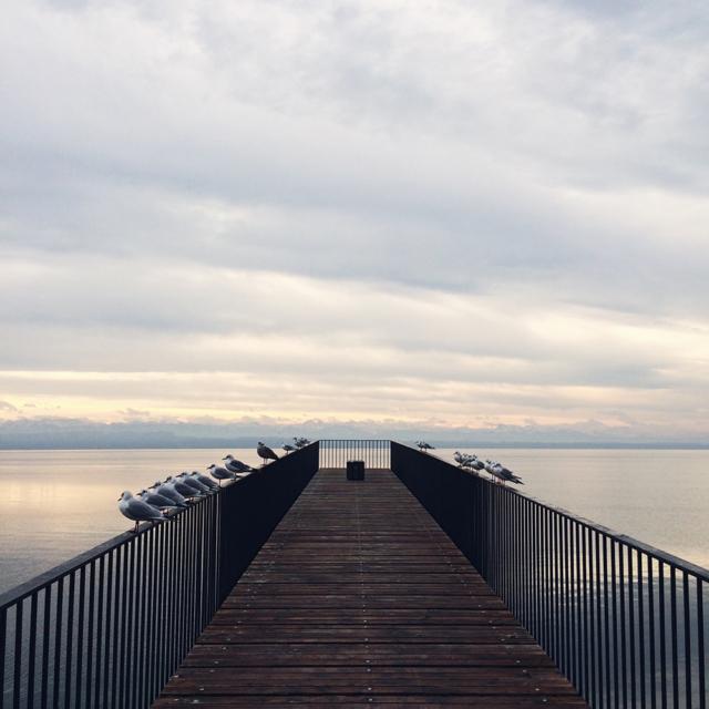 Alignements de mouettes sur la passerelle de l'utopie, au bord du lac de Neuchâtel