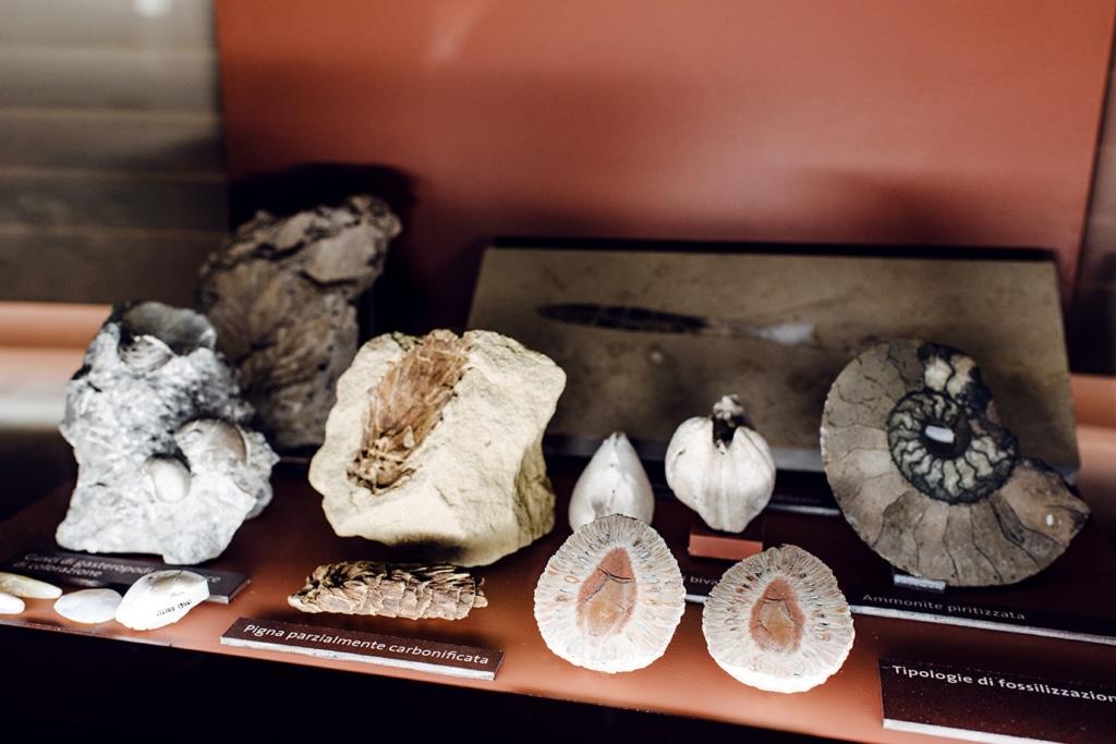 Musée d'histoire naturelle de Venise: collection de fossiles