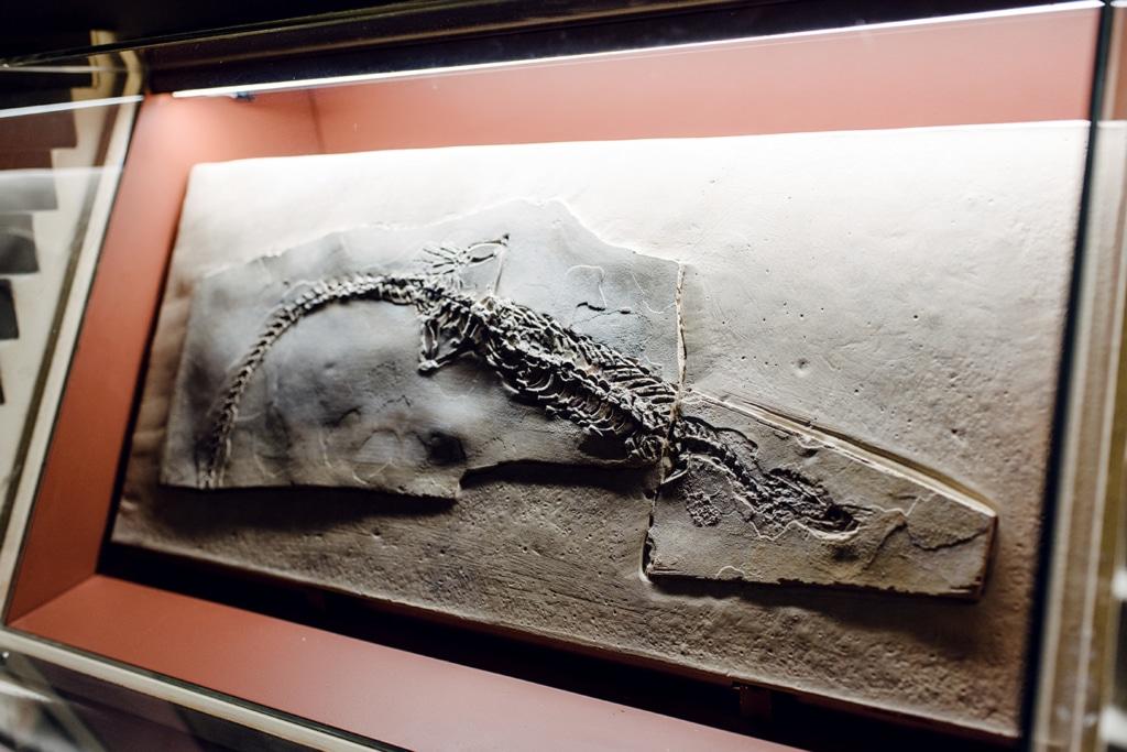 Musée d'histoire naturelle de Venise: fossile d'animal marin
