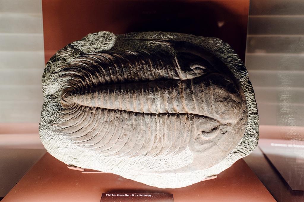 Musée d'histoire naturelle de Venise: fossile de trilobite