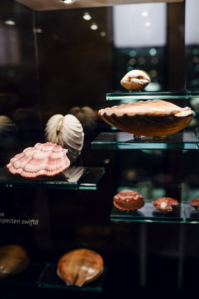 Musée d'histoire naturelle de Venise