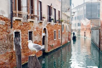 Mouette perchée sur un pont vénitien
