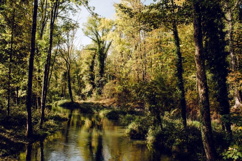 Forêt bordant le lit de l'ancienne Aar, entre Aarberg et Lyss, dans le canton de Berne
