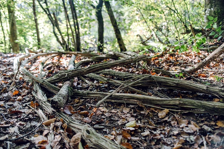 Débris de bois sur le sol de la forêt, le long de l'ancienne Aar
