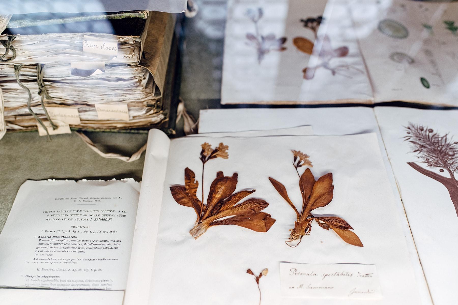 Musée d'histoire naturelle de Venise: herbier avec pages manuscrites et fleurs séchées