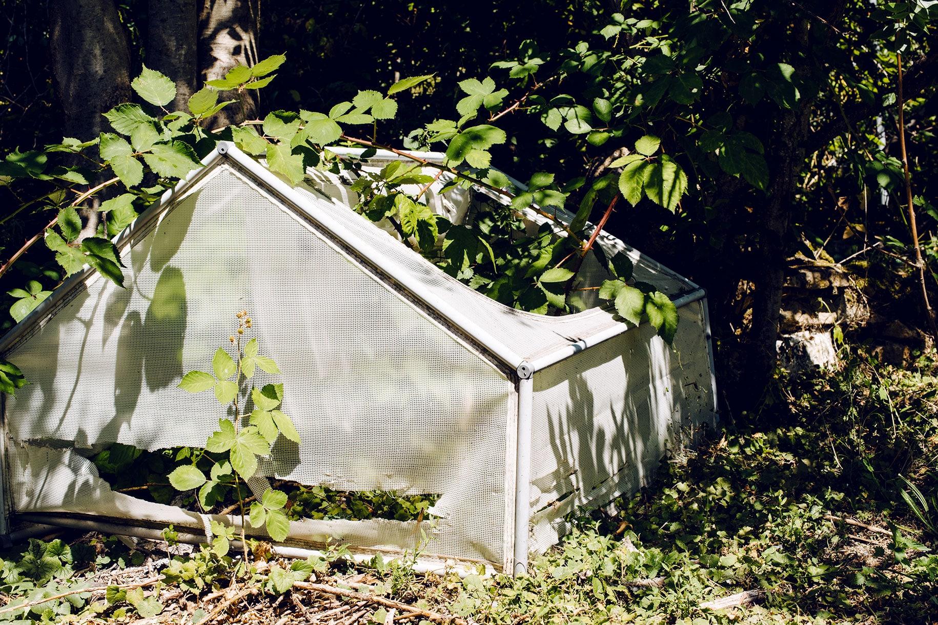 Petite serre abandonnée envahie par la végétation