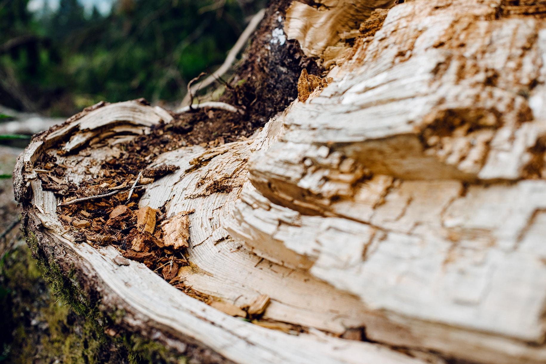Détails d'un tronc d'arbre cassé