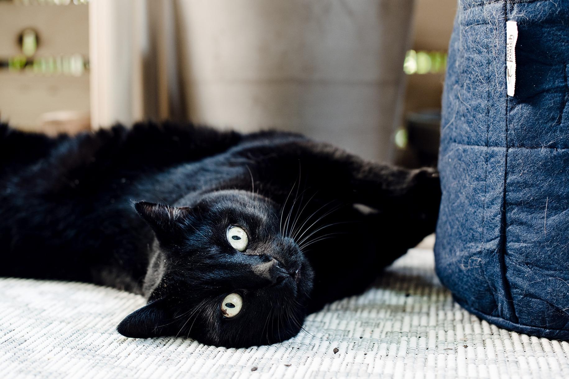 Mon grand chat noir, vautré dans la terre et la poussière sur le balcon