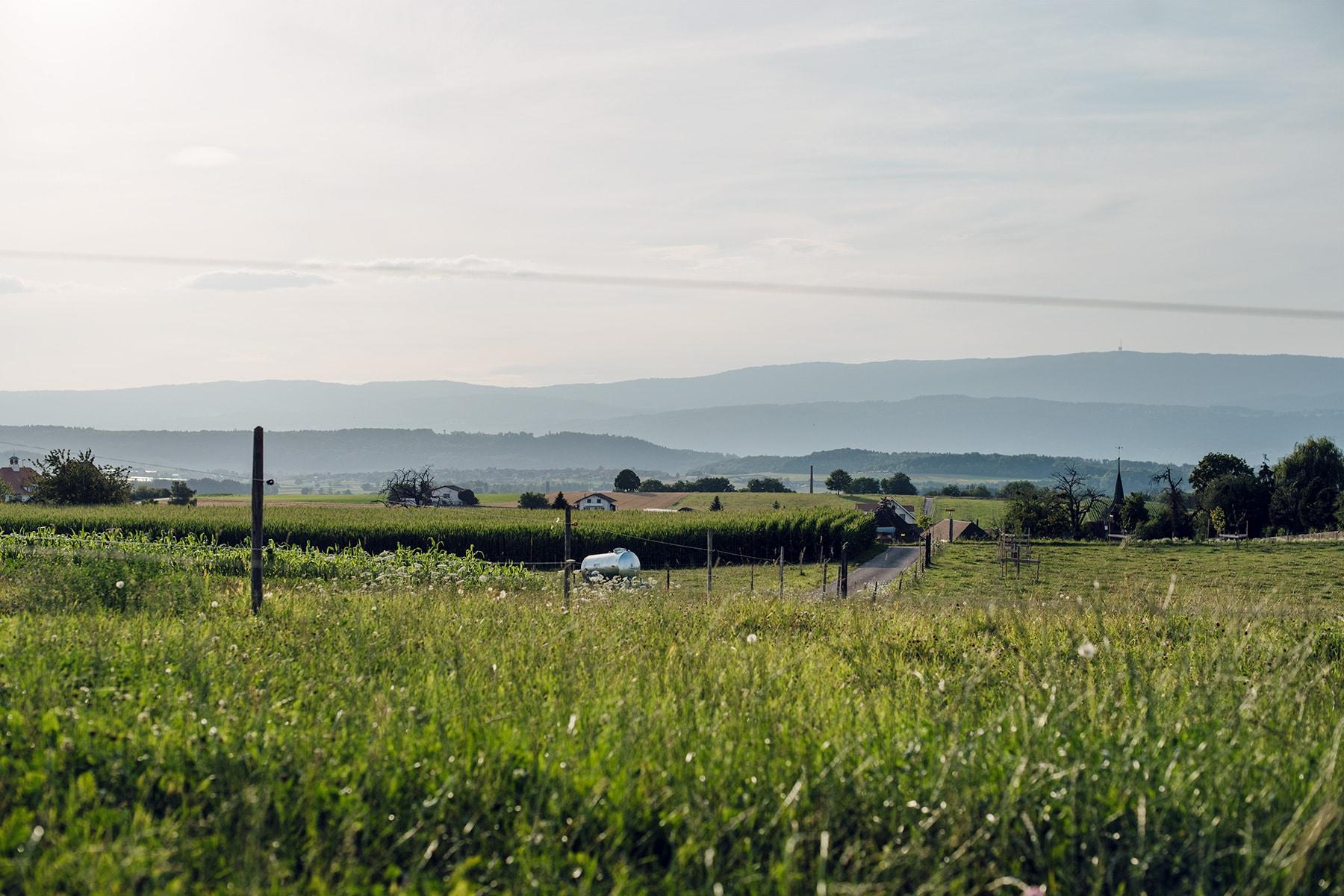 Lumière déclinante sur la campagne seelandaise