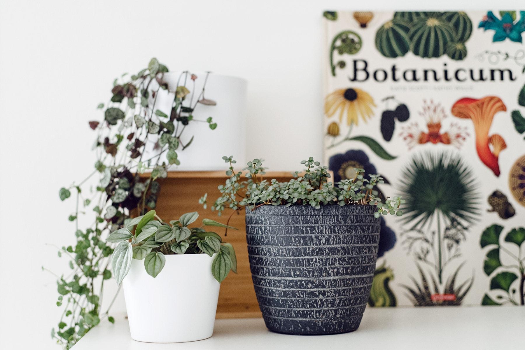"""Quelques plantes d'intérieur sur une étagère et le livre """"Botanicum"""" en fond"""
