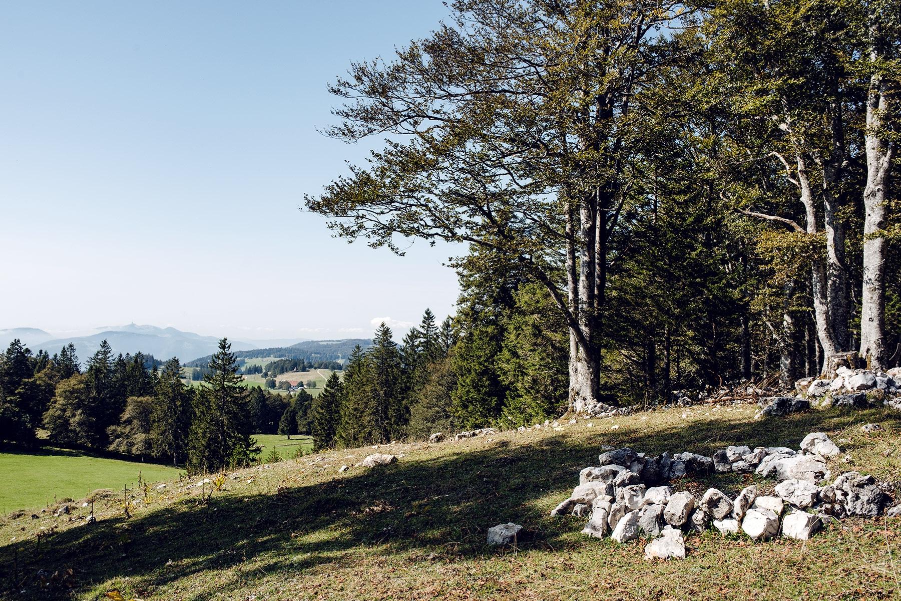 Balade sur le Grenchenberg – vue sur le Jura