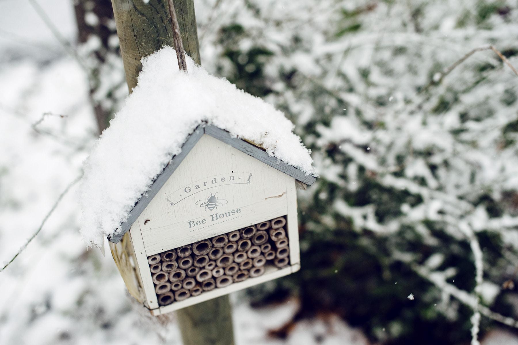 Petit abris pour abeilles recouvert de neige fraiche