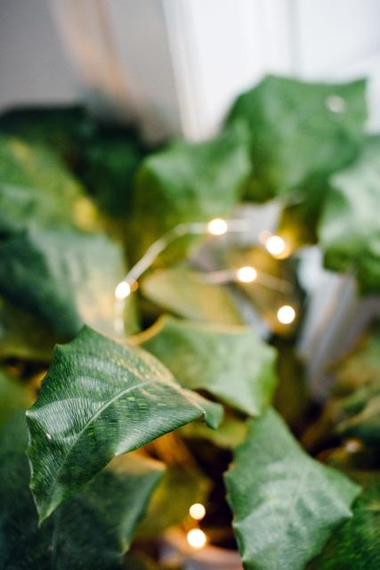 Gros plan sur une feuille de calathea musaica, avec une guirlande lumineuse en arrière plan