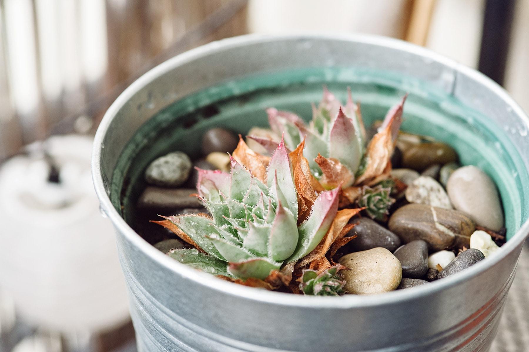 Pot en métal à l'intérieur duquel sont plantées des petites succulentes