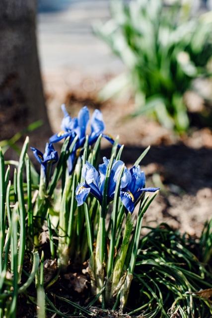 Fleurs au tout début du printemps