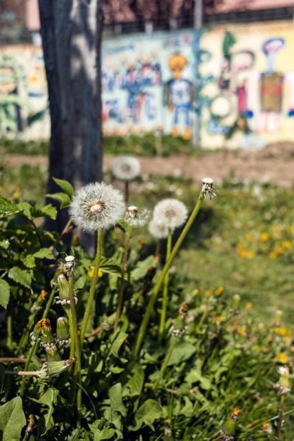 Le printemps au terrain Gurzelen