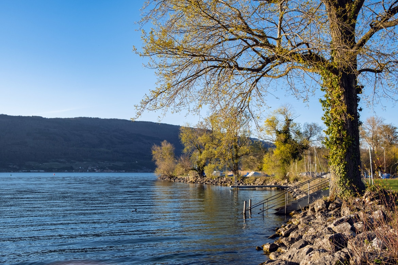 Fin de journée au bord du lac