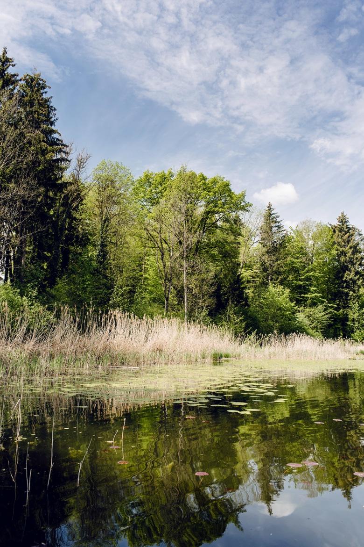 Promenade autour du lac de Burgäschi