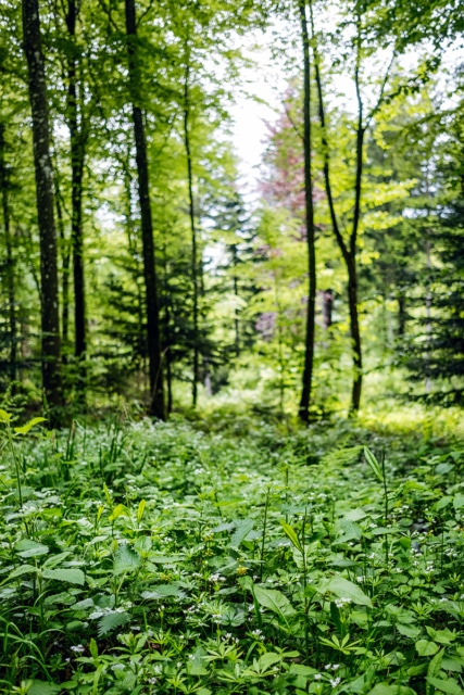 Promenade printanière en forêt