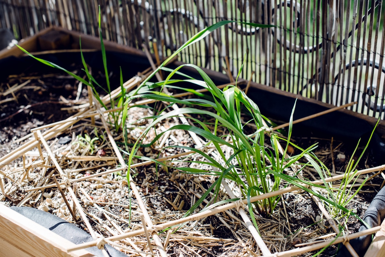 Plantes qui poussent spontanément dans une jardinière de balcon