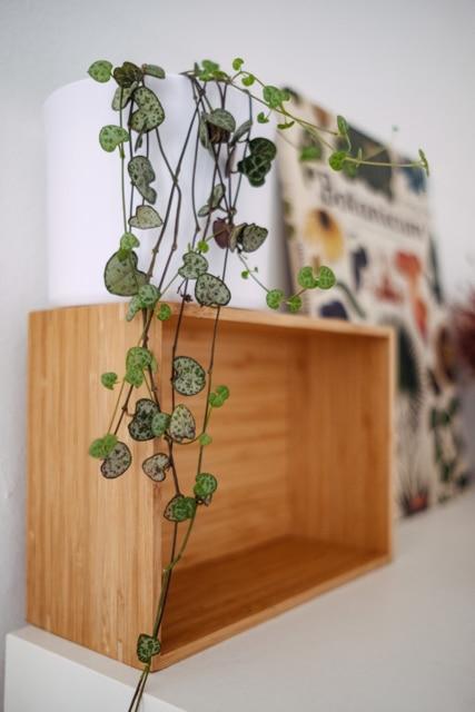 """Chaine de coeurs et livre """"Botanicum"""" en arrière plan"""