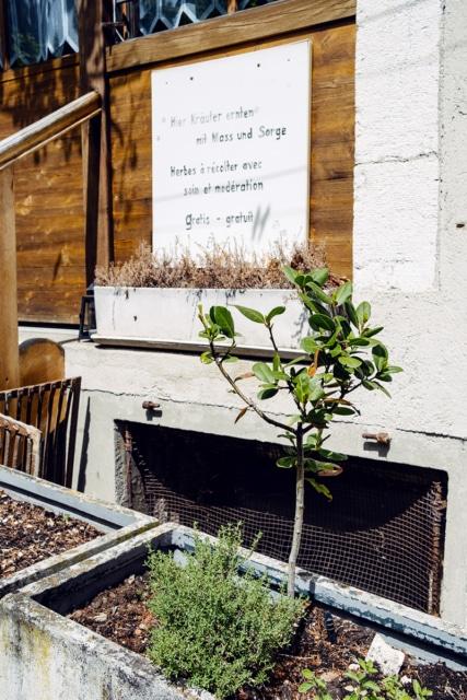 Herbes aromatiques en libre service