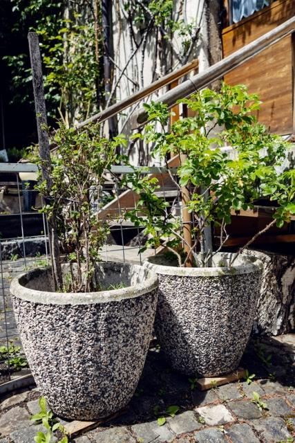 Arbustes dans des grands pots, devant une maison
