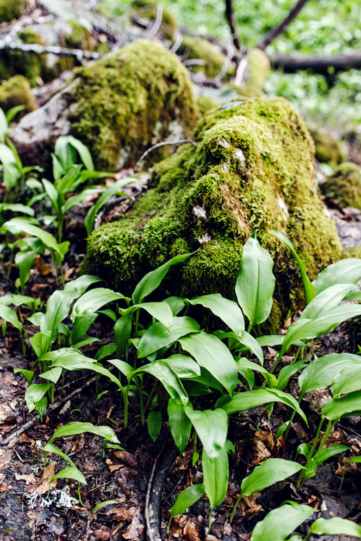 Randonnée dans la forêt au pied des falaises du Grenchenberg